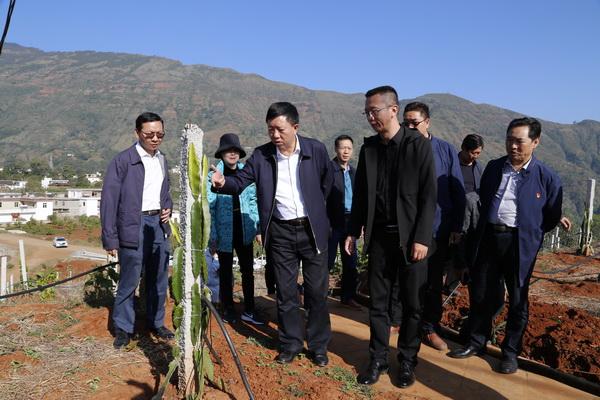 县委书记张华昆到金塘梨树村调研脱贫攻坚工作