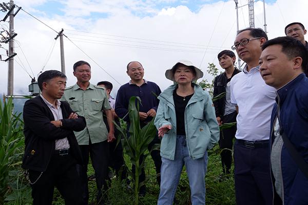 杨永玲到老店镇调研农旅综合体试点项目建设